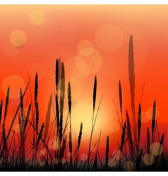 landscape with red sunrise and grass silhouettes vector image vector image