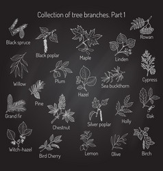 Set of different tree branche vector
