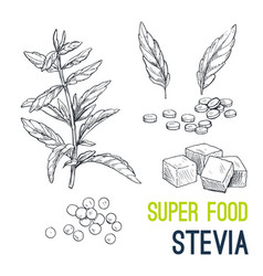 Super food hand drawn sketch vector