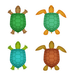Turtle and tortoise in realistic style top view vector