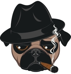 Funny pug with cigar vector image vector image