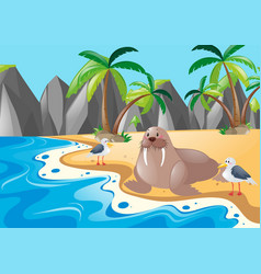 walrus and seagull on the beach vector image vector image