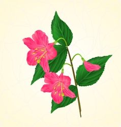 Pink flower decorative shrub weigela cracks vector