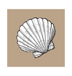 White saltwater scallop sea shell isolated sketch vector