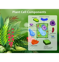 Plant cell components diagram vector