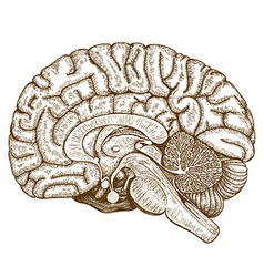 Engraving human brain vector