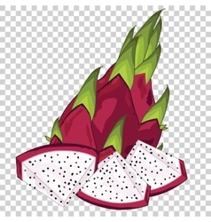Dragon Fruit Isolated vector image vector image