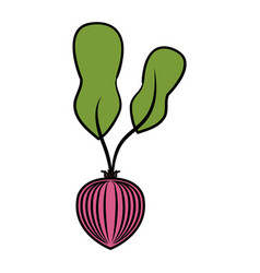 Onion vegetable healthy food vector