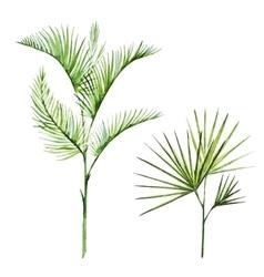 Watercolor tropical plants vector image