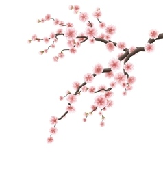 Cherry blossom branch eps 10 vector