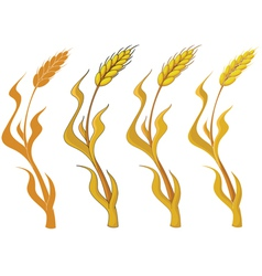 Collection wheat vector