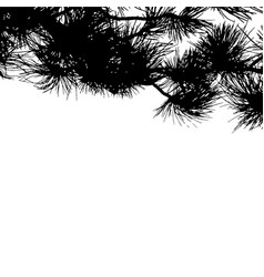 fir tree branches background template for vector image
