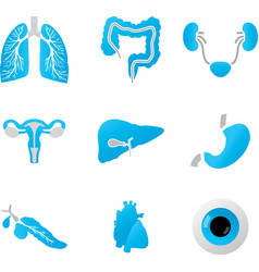Human body parts detailed set vector image