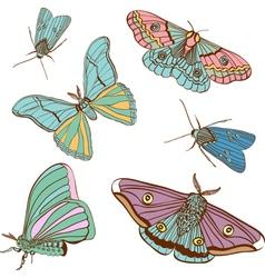 moth vector image