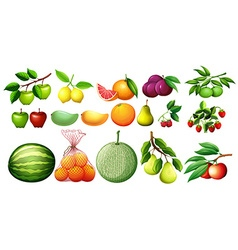 Different kind of fruits vector