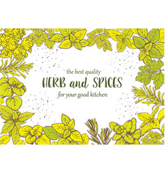 herbs and spices label engraving vector image