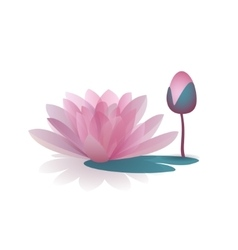 Pink waterlily flower isolated on white background vector image