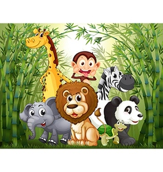 A bamboo forest with many animals vector