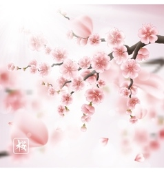 Realistic sakura japan cherry branch eps 10 vector