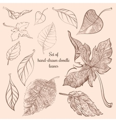 Set of hand-drawn doodle autumn forest leaves vector