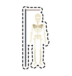 Human skeleton icon image vector