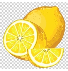 Lemon Isolated vector image