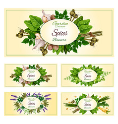fresh herbs spices and condiments banner set vector image