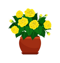 Begonia house plant in flower pot vector