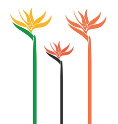 Bird of Paradise vector image