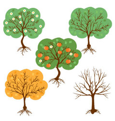 set of a harvest seasons of a tree vector image vector image