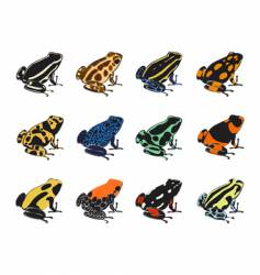 various species of poison-dart frogs vector image