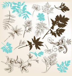 Floral set of leafs and branches of plants vector
