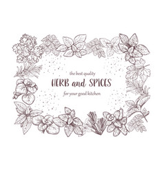 Herbs and spices label engraving vector