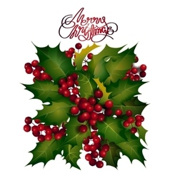Holly berries design vector image vector image