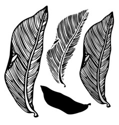 Leaf of the pipal vector