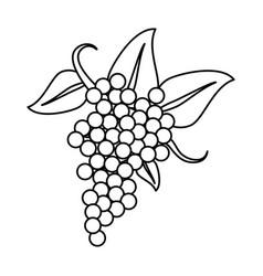 Bunch grape wine thin line vector