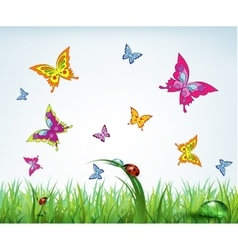 Grass butterfly and ladybug vector