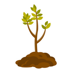 tree growing in the soil vector image