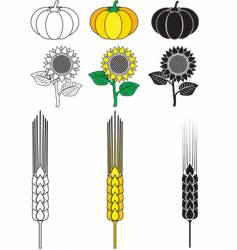 Sunflower pumpkin wheat vector