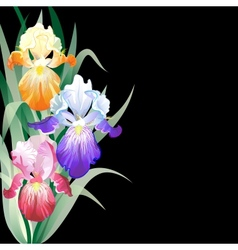 Black holidays card with Iris flowers vector image