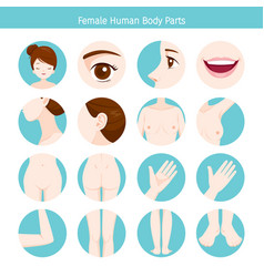 female human external organs body set vector image