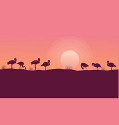 Beauty sceney flamingo silhouettes collection vector