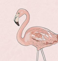 Flamingoakva vector