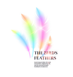 bright bird feathers on a white background vector image vector image
