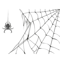 Large black spider and web on white background vector
