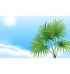 A palm plant and a clear blue sky vector