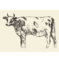 Spotted cow dutch cattle breed hand drawn sketch vector