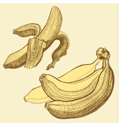 Bananas engraving drawing fruit and food themes vector