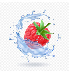 Ripe raspberry sweet berry and water splash vector