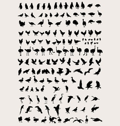 Bird and Fowl Silhouettes vector image